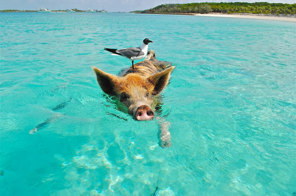 best snorkeling in the bahamas